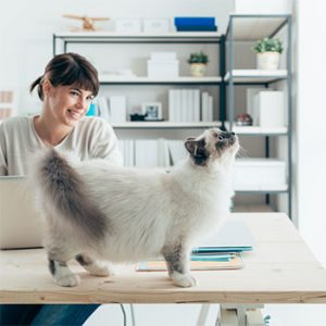 employee who is motivated by the office cat